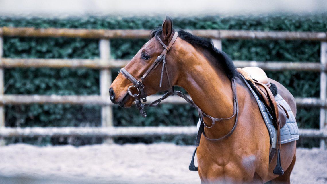 Dobre sztyblety jeździeckie i inne akcesoria do jazdy konnej